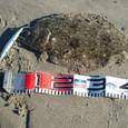 鹿島さんヒラメ第二段46cm-1