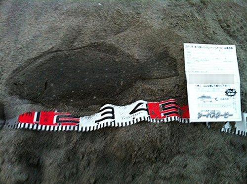 鹿島さんのヒラメ45cm