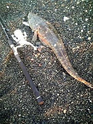マゴチ02-67cmエギ爺さん