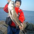 シーバス02-ぴすとるぴーとさん